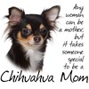 Chihuahuas
